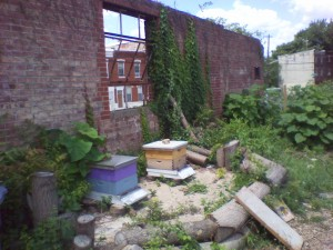 Photo of bee hives in urban garden in Philadelphia