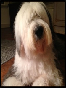 Wilson, an Old English Sheepdog, will be here from 1:30-2:30pm.