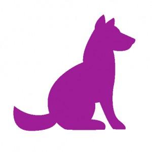 dog_purple