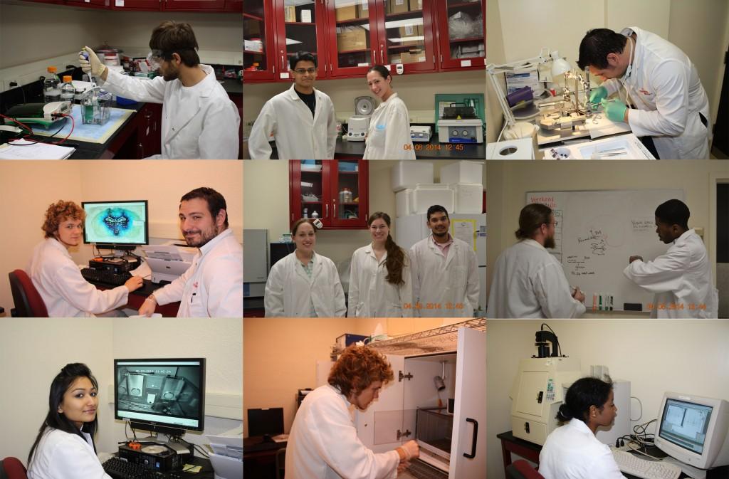 lab-life