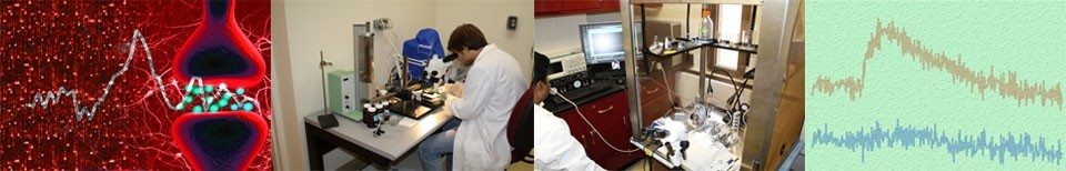 Neurochemistry and Cognition (NECO) Lab