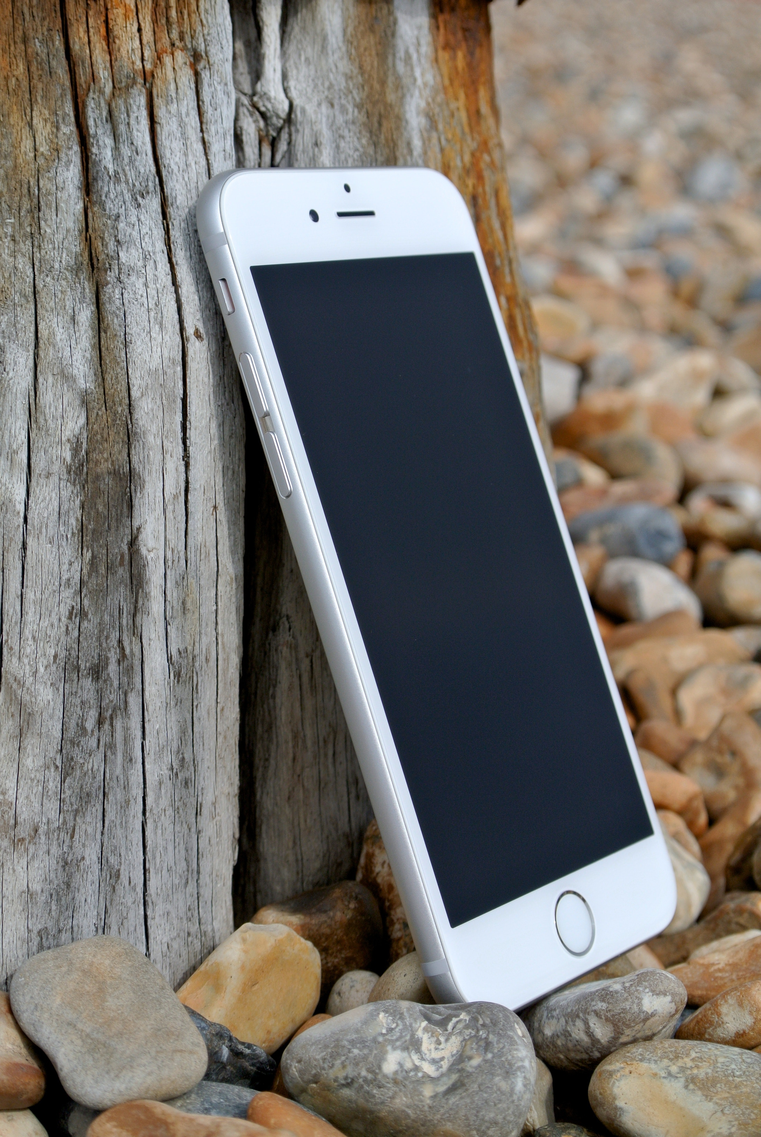 smartphone on rocks beside tree roots