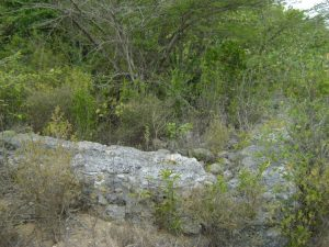Foundation of historic structure in overgrowth