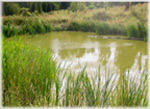 Pennypack Ecological Restoration Trust Stormwater Wetland