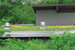 Schuylkill Center for Environmental Stormwater Management Techniques