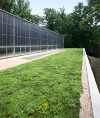 Sports Facility Green Roof