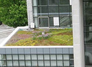 Villanova University Green Roof