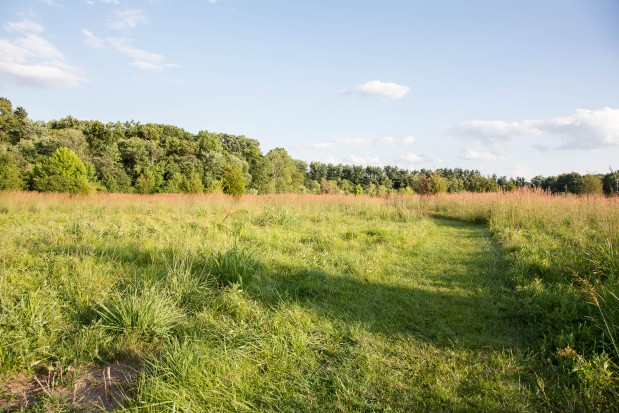 Crossways Preserve Meadow Restoration – Wissahickon Valley Watershed Association