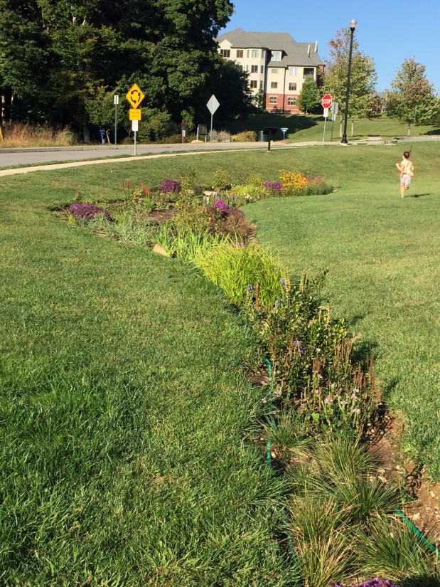 Haverford Reserve Stormwater Education and Rain Garden Installation Program