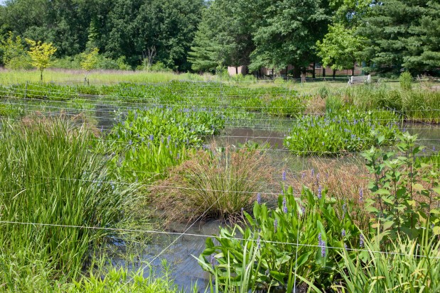 Whitemarsh Wetland Restoration – Wissahickon Valley Watershed Association