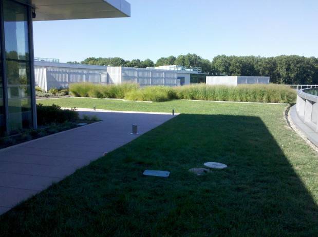 Advanced Green Roof at SAP Headquarters